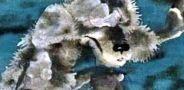 Волчище-серый хвостище