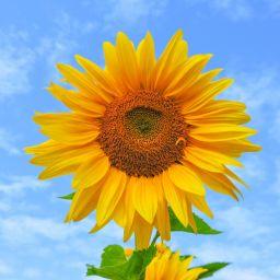 Разгадайте летние анаграммы по картинкам!