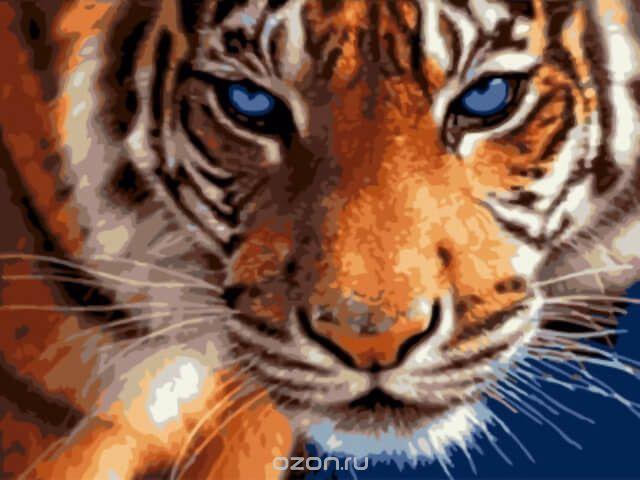 """Набор для раскрашивания ТМ Цветной """"Взгляд тигра"""", 40 х 30 см"""
